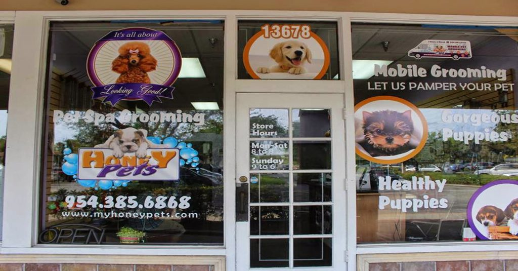 Puppies For Sale Fort Lauderdale